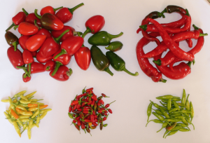 Chillies from The Open Sourcerer