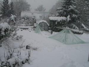 Snow in Surrey