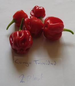 Congo Trinidad