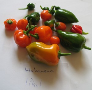 Habanero